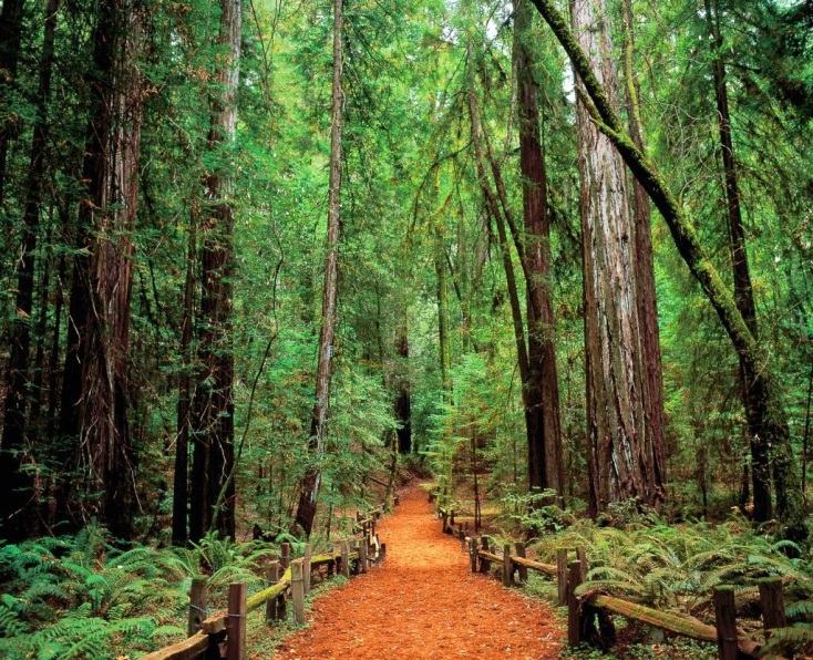 red wood for gorgeous - photo #41